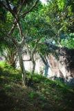 Evergreen flora, trees and plants diversity in Trivandrum, Thiruvananthapuram Zoo Kerala India. Evergreen flora, trees and plants diversity, huge trees and Royalty Free Stock Photos