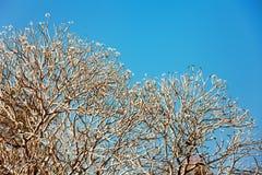 Evergreen flora, trees and plants diversity in Trivandrum, Thiruvananthapuram Zoo Kerala India. Evergreen flora, trees and plants diversity, huge trees and Royalty Free Stock Image