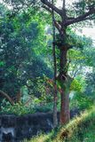 Evergreen flora, trees and plants diversity in Trivandrum, Thiruvananthapuram Zoo Kerala India. Evergreen flora, trees and plants diversity, huge trees and Royalty Free Stock Photography
