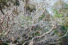 Evergreen flora, trees and plants diversity in Trivandrum, Thiruvananthapuram Zoo Kerala India. Evergreen flora, trees and plants diversity, huge trees and Stock Image