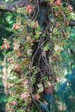 Evergreen flora, trees and plants diversity in Trivandrum, Thiruvananthapuram Zoo Kerala India. Evergreen flora, trees and plants diversity, huge trees and Stock Photo