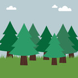 Evergreen forest. Evergreen tree landscape with grass and sky Royalty Free Stock Photography