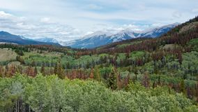 Green forest and snow mountains royalty free stock image