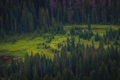 Evergreen Forest Clearing. Beautiful aerial view of a cleaning in an evergreen forest within the Rocky Mountain Nation Park taken from Trail Ridge Road, Estes Stock Photography