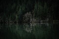 Evergreen forest on lake coast Royalty Free Stock Photo