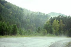 Evergreen Forest Overview. Tops of Tall Green Trees with Dense Fog Rolling Over Royalty Free Stock Photography