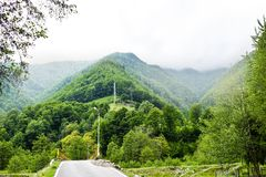 Evergreen Forest Overview - Tops of Tall Green Trees with Dense Fog Rolling In Over Lush Wilderness. Lotrului Mountains in royalty free stock photos