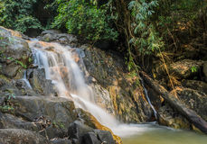 Evergreen forest waterfall Stock Images