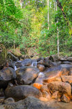 Evergreen forest waterfall Royalty Free Stock Photo