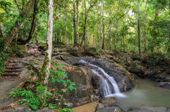 Evergreen forest waterfall Stock Photos