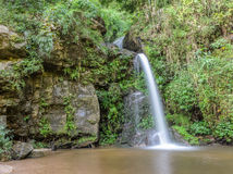 Evergreen forest waterfall in Thailand Stock Images
