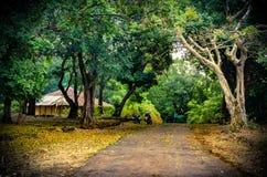 Greenery... Lush Green Rainforest in Sahyadri Mountain Range of Maharashtra in India during Summer season Stock Photo