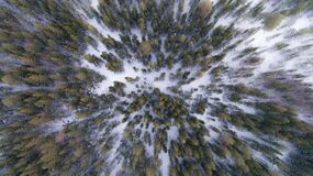 Evergreen forest in winter Royalty Free Stock Images