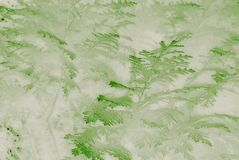 Evergreen conifer leaves mist affect. royalty free stock photos