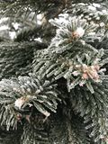 Evergreen frost royalty free stock photo
