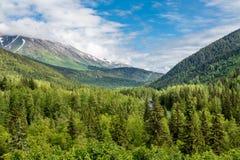 Evergreen i alaskabo vildmark royaltyfria foton