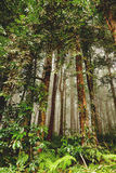 Evergreen jungle forest after rain. Bali, Indonesia. Royalty Free Stock Image