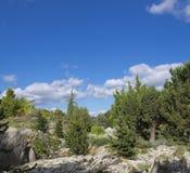 Evergreen med vaggar i en trädgård Royaltyfria Foton