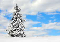 Evergreen nella neve Fotografia Stock