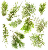 Evergreen plants branches isolated set Stock Photography