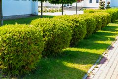 Geometrically trimmed shrubs in landscape design. Evergreen plants and geometrically trimmed shrubs in landscape design stock photo