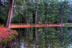 Evergreen Reflections. Evergreens and their reflections on a lake stock photo