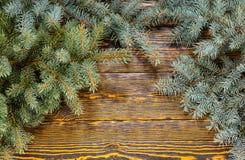 Evergreen sörjer filialer på en trätabell royaltyfria foton