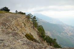 Evergreen sörjer träd på brant lutning för stenigt berg fotografering för bildbyråer