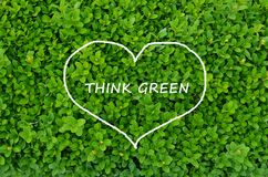 Evergreen shrub with Think green message Royalty Free Stock Photo