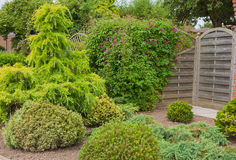 Evergreen shrubs and trees in a garden corner Stock Photo