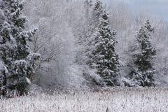 Evergreen snö täckte fröjd Fotografering för Bildbyråer