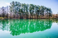 Evergreen som reflekterar i ett damm i vår på en solig dag arkivbilder