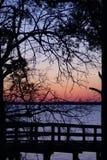 Evergreen Sunset Royalty Free Stock Image