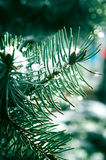 Evergreen tree Royalty Free Stock Images
