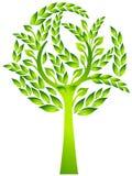 Evergreen tree Royalty Free Stock Photos