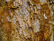 Evergreen Tree Bark Background. A closeup of an evergreen tree's trunk showing the bark's detail Stock Photos