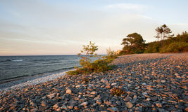 Evergreen tree on a beach with ocean in the background Stock Photo