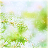 Evergreen tree branch backdrop Royalty Free Stock Image