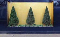 Evergreen Tree Bush Royalty Free Stock Photos