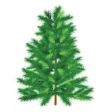 Evergreen tree fir tree Stock Photo