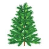 Evergreen tree fir tree Stock Photo