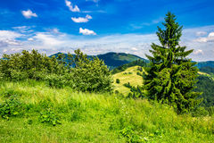 Evergreen tree on a mountain slope Royalty Free Stock Image