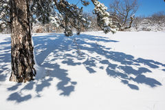 Evergreen tree and shadow in white snow Royalty Free Stock Photo