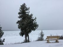 Evergreen tree and snow covered bench Stock Photo