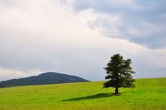 Evergreen tree and stormy sky Stock Photography