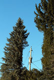 Evergreen tree trimmed for powerline Royalty Free Stock Images