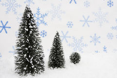 Evergreen trees Stock Photo