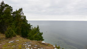 Evergreen trees growing on a limestone cliff on the island Gotland stock video footage
