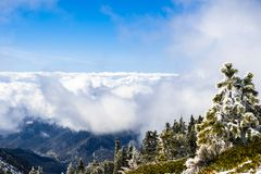 Evergreen trees high on the mountain; sea of white clouds in the background covering the valley, Mount San Antonio (Mt Baldy), Los. Angeles county, California stock images