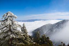 Evergreen trees high on the mountain; sea of white clouds in the background covering the valley, Mount San Antonio (Mt Baldy), Los. Angeles county, California royalty free stock photography